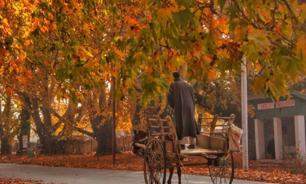 Autumn heralds Kashmir's season of plenty