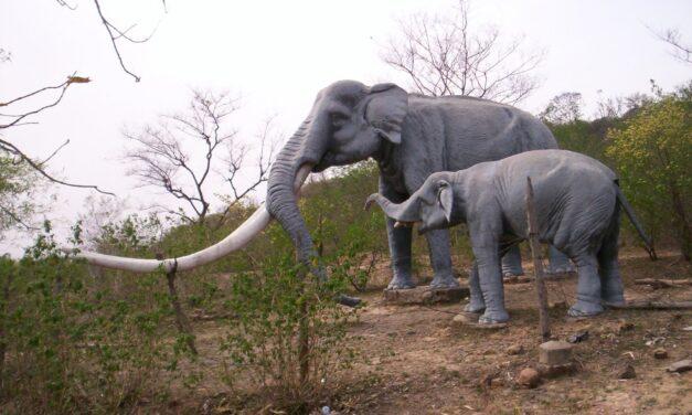 Siwalik Fossil Park