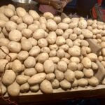 Two new potato varieties to improve yield by 25%